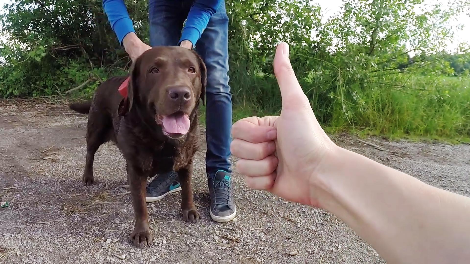 Собака в Словении