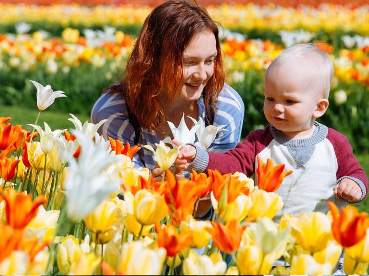 Словения тюльпаны